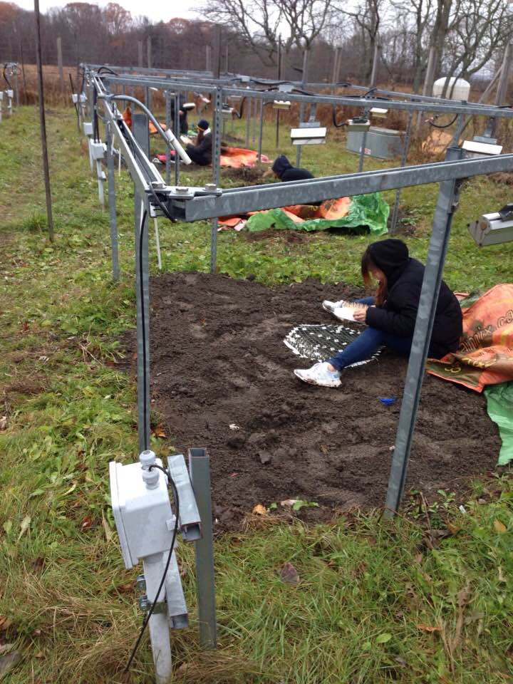 Planting Sydney Rotman's germination experiment at the Experimental Climate Warming Array, November, 2017.