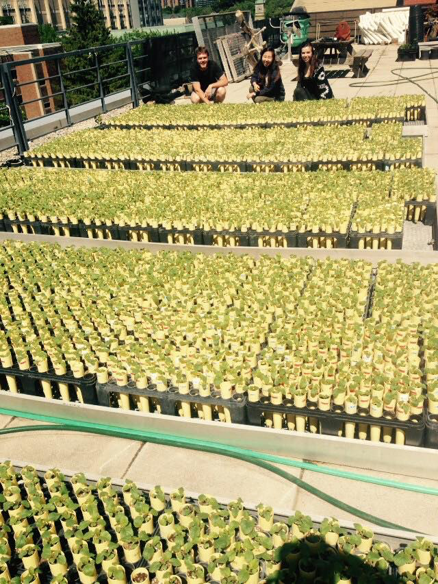 Summer 2016 planting on the rooftop of the Earth Sciences Centre.