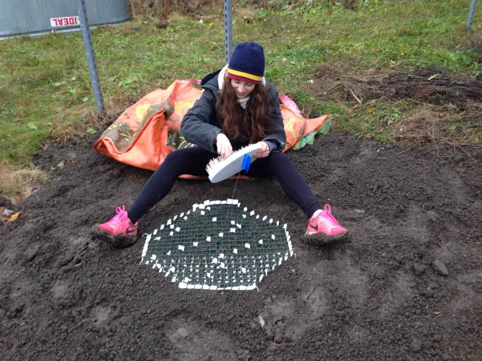 Sydney Rotman planting her germination experiment at the Experimental Climate Warming Array, November, 2017.