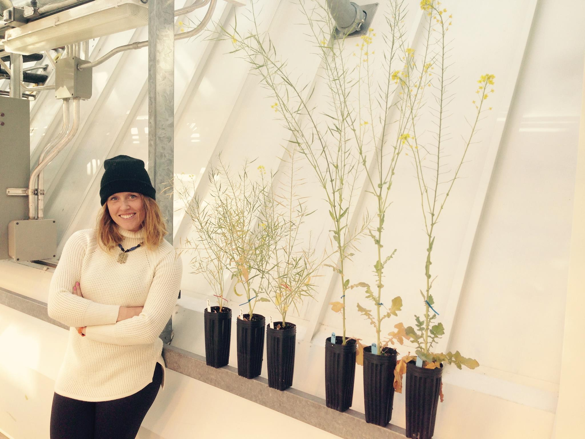 Erin Westover, with Brassica flowering time selection lines (Early on left, Late on right).